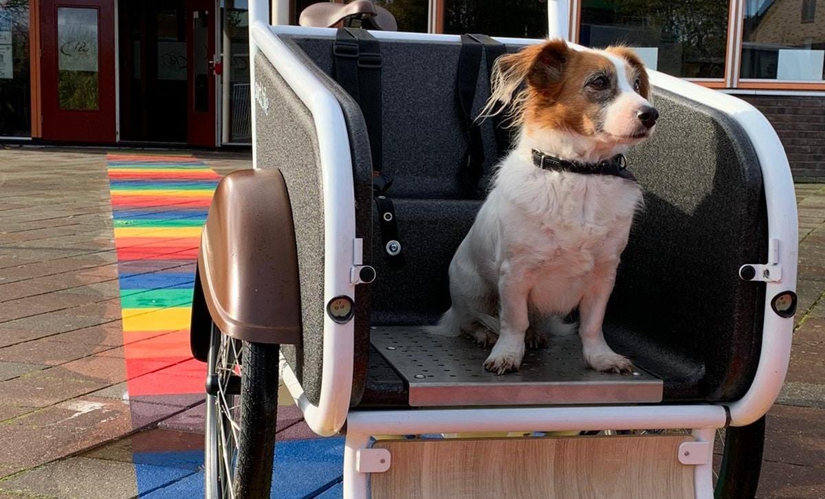 Waarom zou je een bakfiets aanschaffen voor je hond?