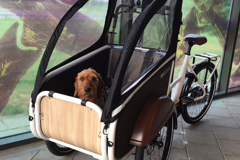 Hond in bakfiets