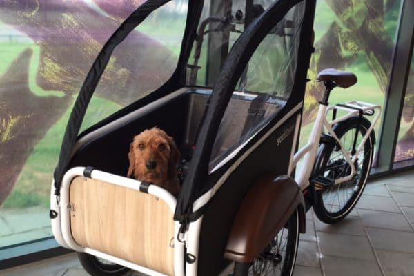 Een ideale bakfiets voor honden