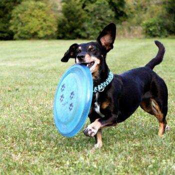 6 spelletjes om met je hond te doen soci.bike